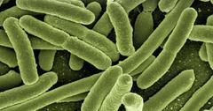 uploads///koli bacteria _