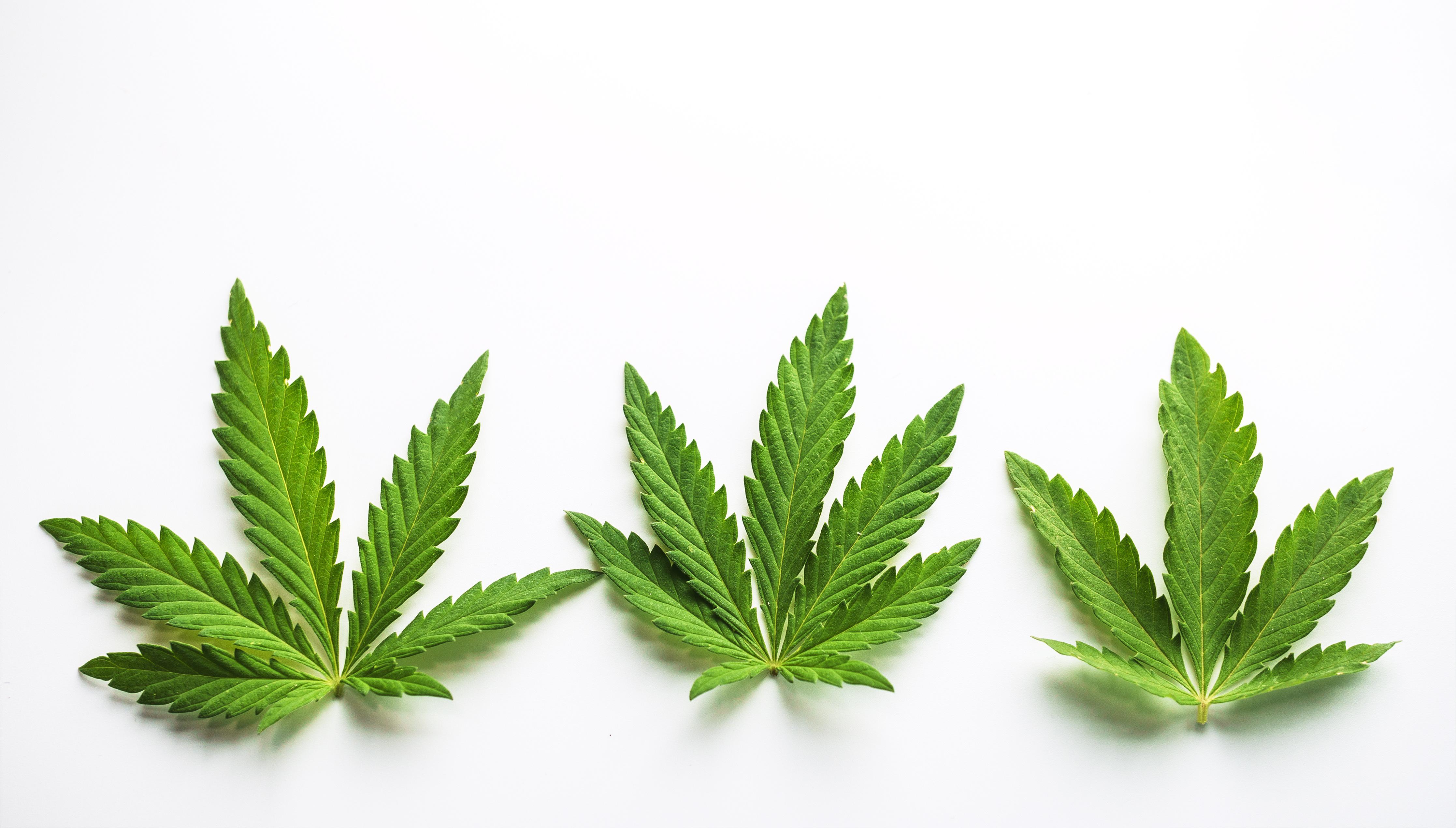 uploads///Marijuana