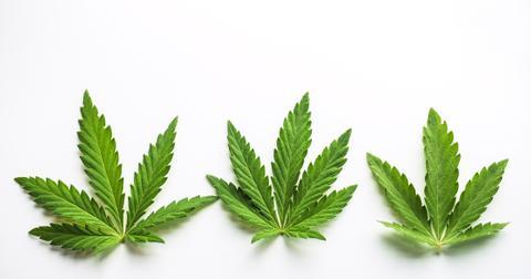 uploads/2020/03/Marijuana.jpeg