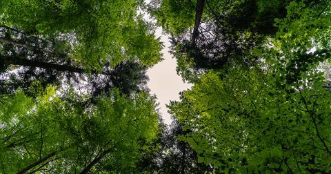 uploads/2018/06/forest-3409907_1280.jpg