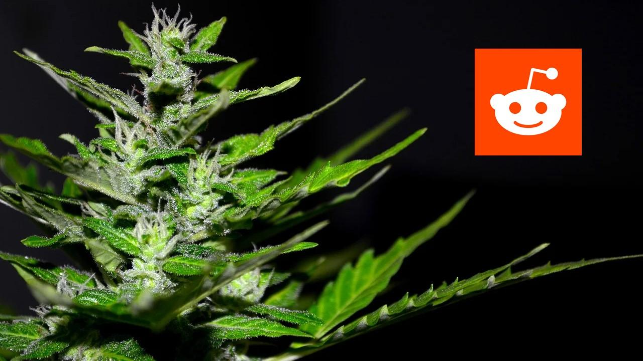 Marijuana plant and Reddit logo