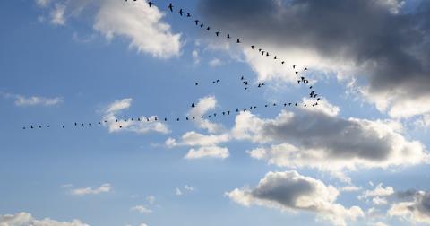 uploads/2020/06/geese-3893251_1280.jpg