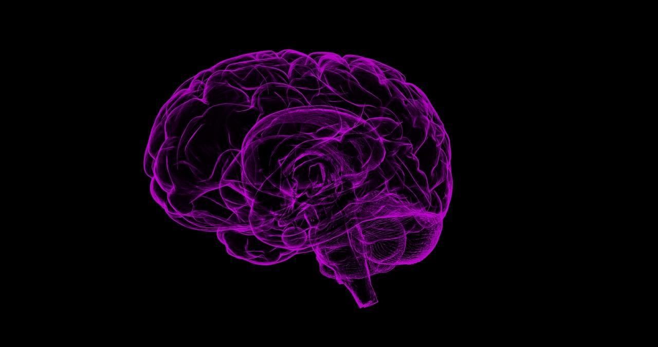 uploads///brain _