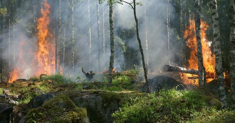 uploads/2019/01/forest-fire-432870_1280.jpg