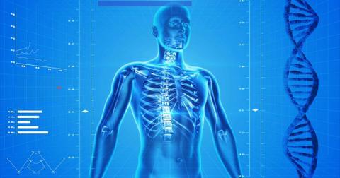 uploads/2019/01/human-skeleton-163715_1280.jpg