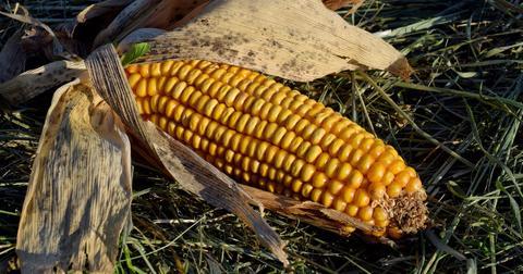uploads/2018/05/corn-on-the-cob-3377204_1280.jpg