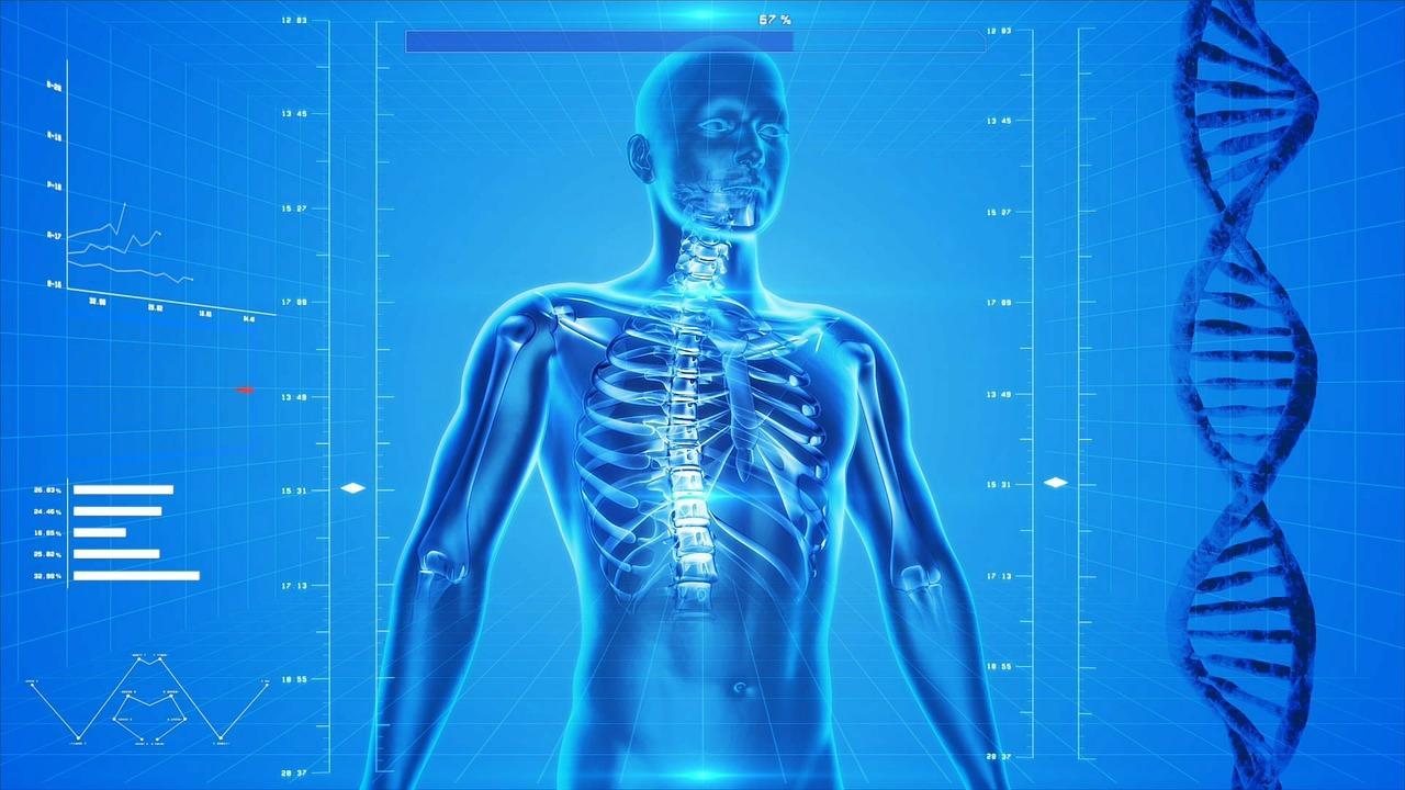 uploads///human skeleton _