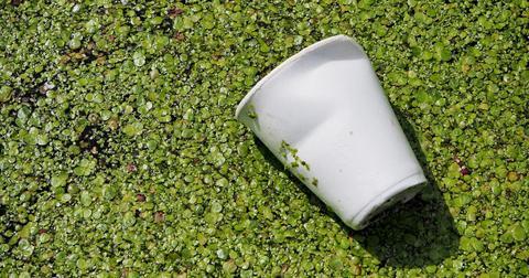 biodegradable-plastic-companies-1610709744442.jpg