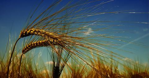 uploads/2018/04/wheat-3244059_1280.jpg