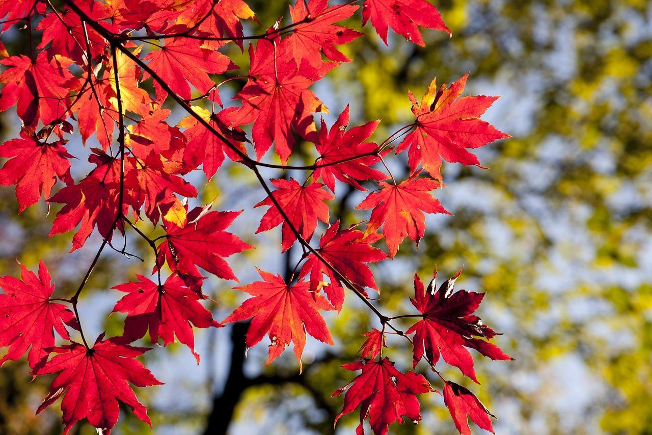 uploads///autumn _