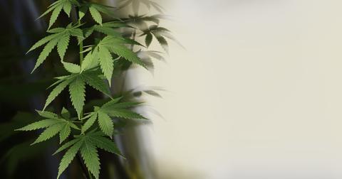 uploads/2019/06/cannabis-4271767_1280.jpg