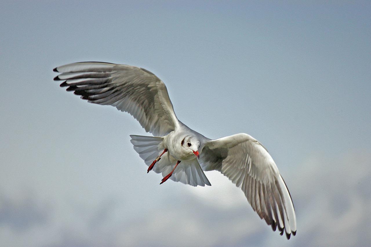 uploads///seagull _