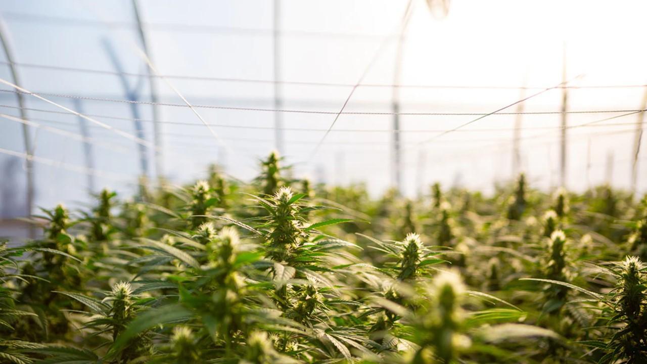 uploads///nebraska marijuana
