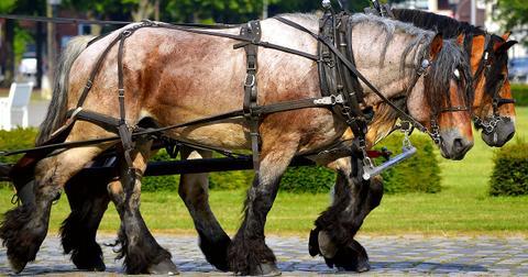 uploads/2020/07/work-horses-2383623_1280.jpg