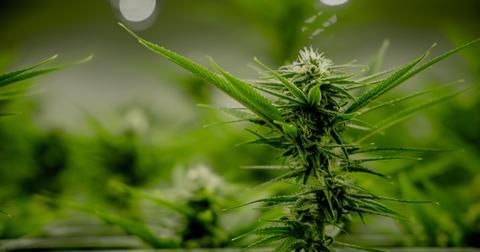 uploads/2020/05/marijuana79.jpg