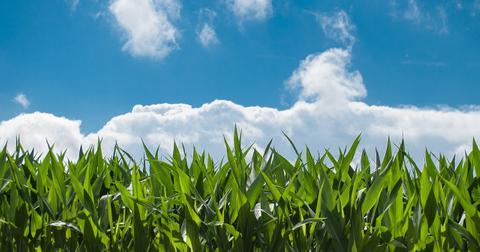 uploads/2018/09/corn-field-440338_1280.jpg