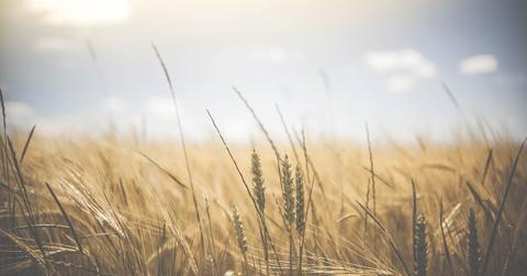 uploads/2018/09/agriculture-1845835_1280-1.jpg