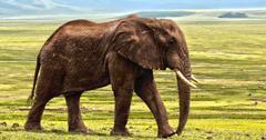 uploads///elephant _