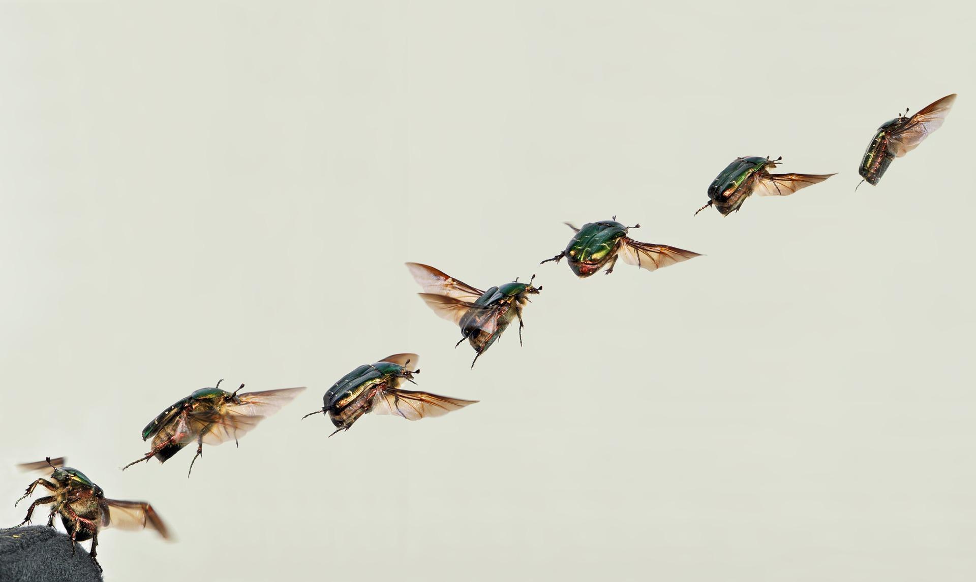 uploads///shiny rose gold beetle _