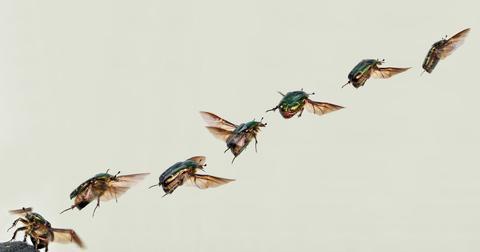 uploads/2018/12/shiny-rose-gold-beetle-62906_1920.jpg
