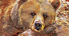uploads///bear _