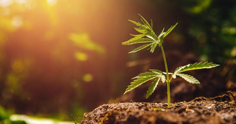uploads/2019/08/Bruce-Linton-Buys-More-of-Canopy-Growths-Stock.jpeg