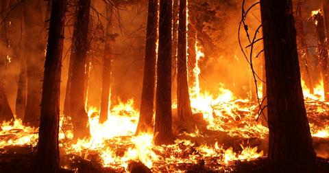 uploads/2019/02/wildfire-1105209_1280-1.jpg