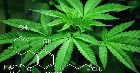 uploads/2019/06/marijuana-3678222_1280.jpg