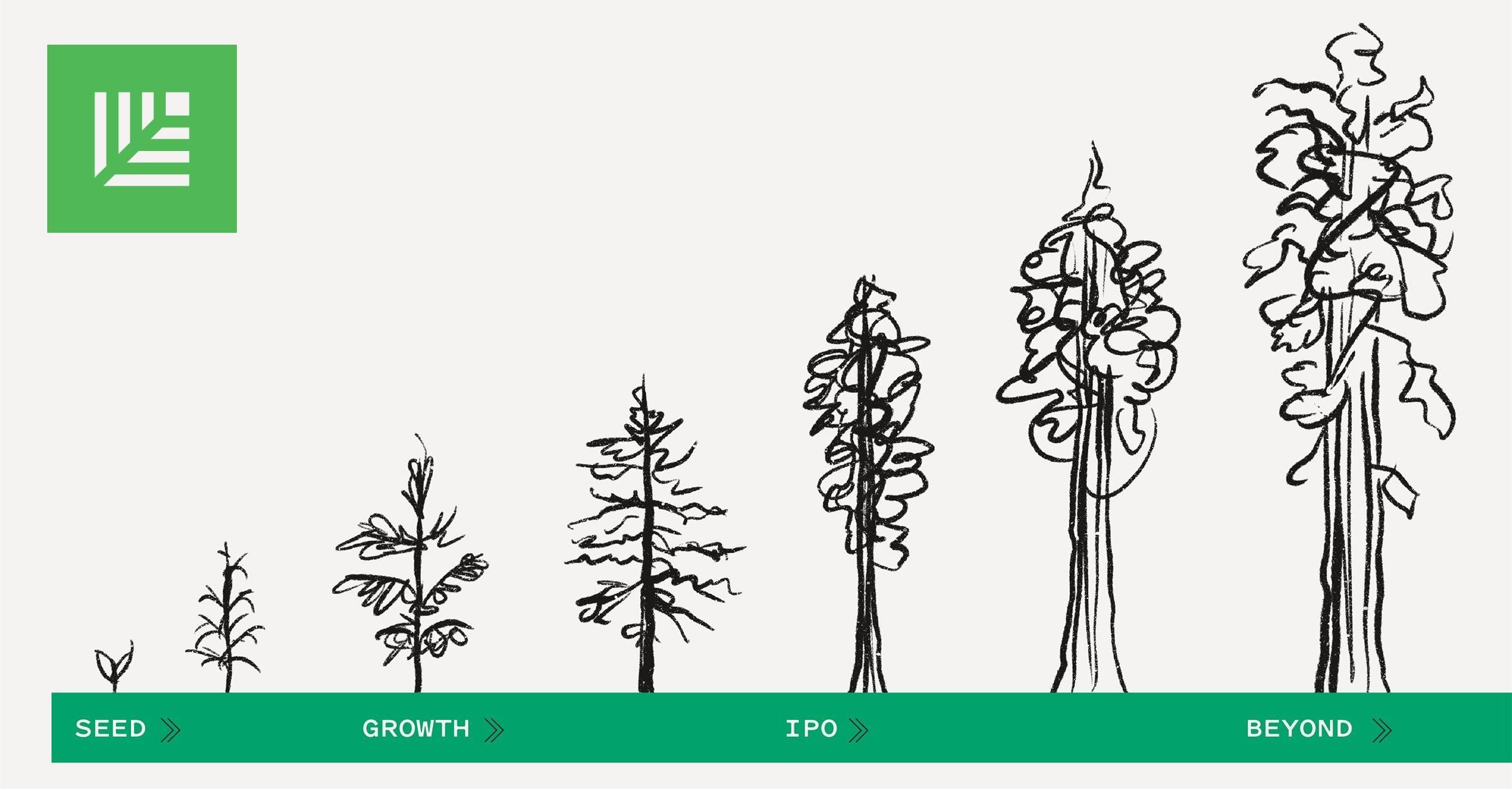 Illustration of sequoia tree growth