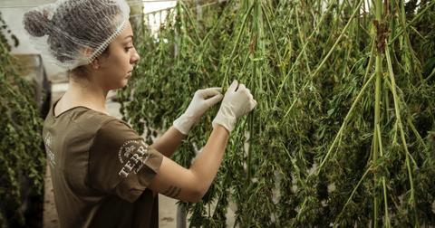 terre-di-cannabis-fioihwb71_k-unsplash-1-1603475915347.jpg