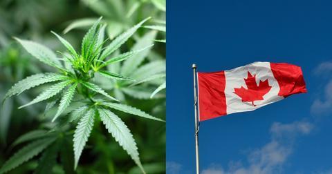 how-to-buy-canadian-cannabis-stocks-1605030500267.jpg