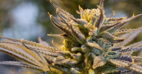 uploads/2018/12/cannabis-2152602_1280.jpg