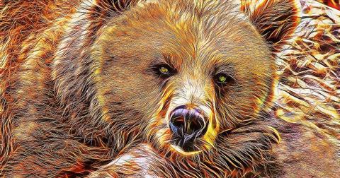 uploads/2019/03/bear-1254509_1280.jpg