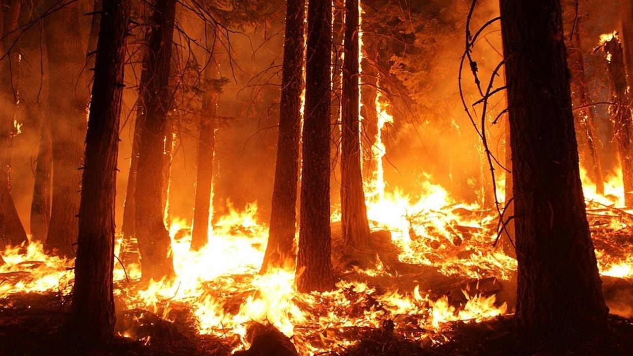 uploads///wildfire forest fire blaze smoke
