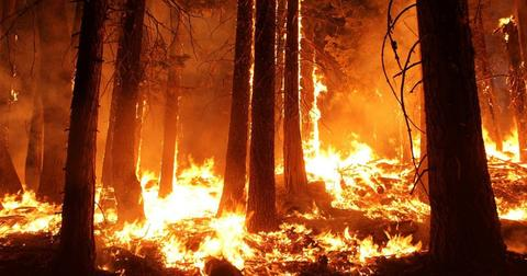 uploads/2018/12/wildfire-forest-fire-blaze-smoke.jpg