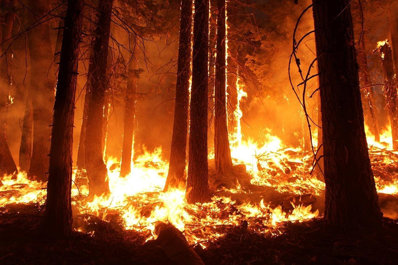 uploads///wildfire _