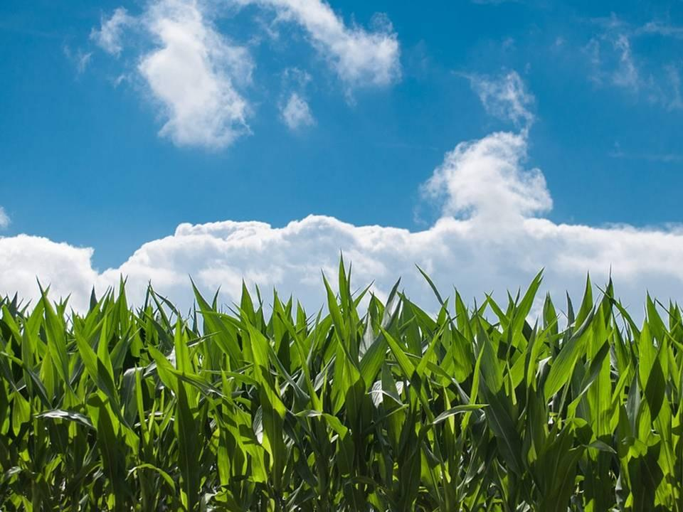uploads///corn field blue sky countryside