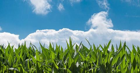 uploads/2018/06/corn-field-blue-sky-countryside.jpg