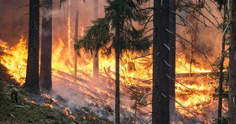 uploads/2019/11/forest-fire-2268725_1280.jpg