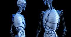uploads///anatomical _
